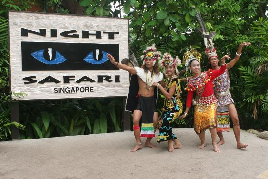 Night Safari: Unlimited Fun